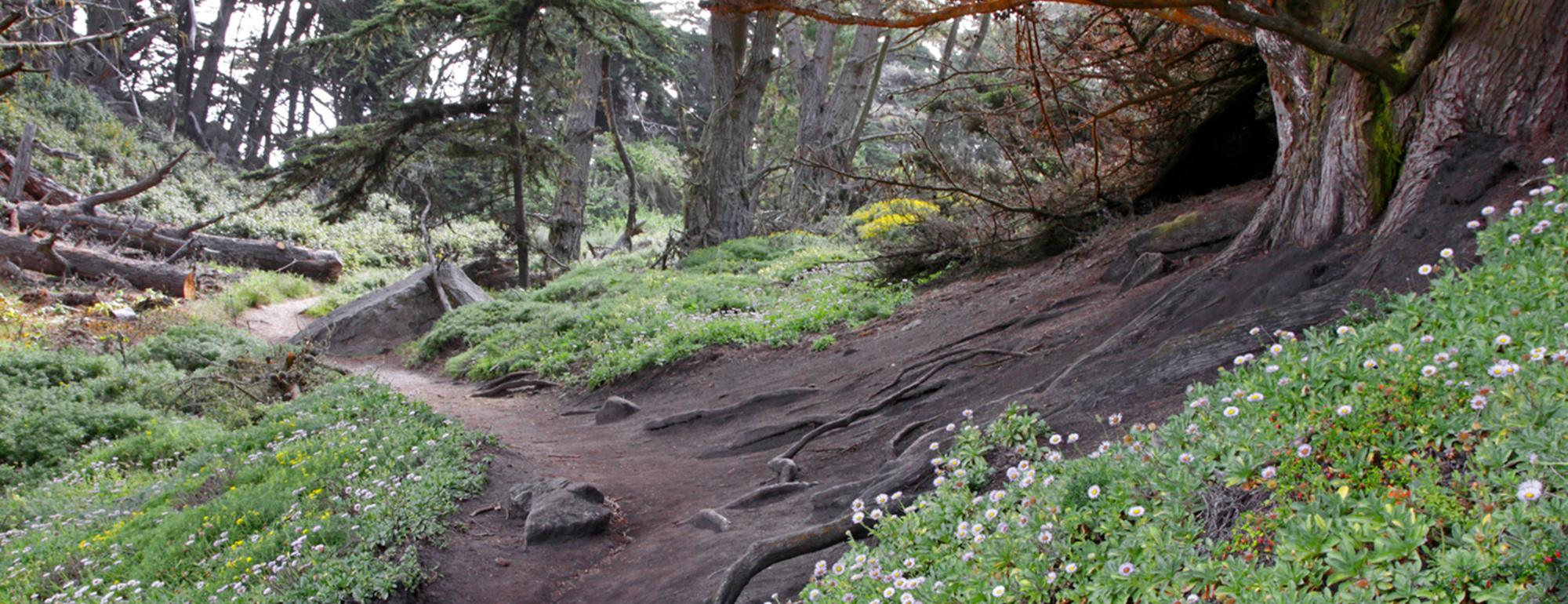 photo of a hiking trail in Point Lobos