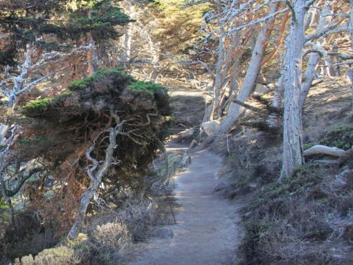 photo from Cypress grove trail in Point Lobos