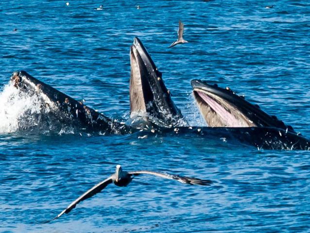 photo of whales